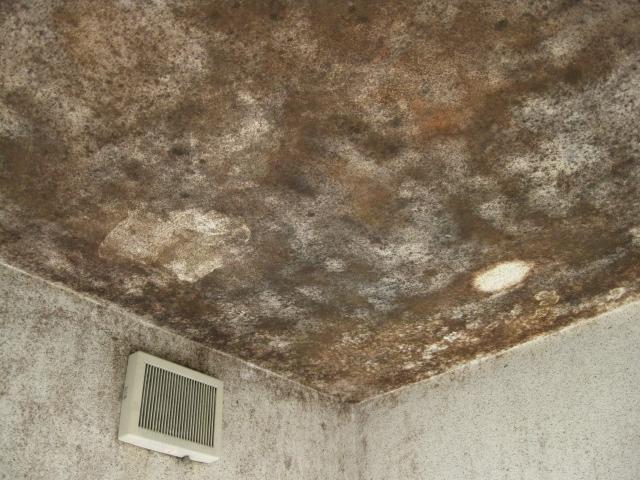 浴室の塗り壁調の天井のカビ抜きのサムネイル